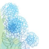 Vector corner bouquet of outline Hydrangea or Hortensia flower bunch and ornate foliage in blue and green on the pastel back. Vector corner bouquet of outline royalty free illustration