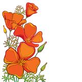 Vector corner bouquet of outline orange California poppy flower or California sunlight or Eschscholzia, leaf and bud isolated. Vector corner bouquet of outline stock illustration