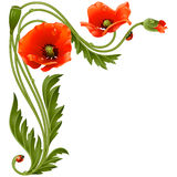 Vector corner pattern with red poppies and ladybug Stock Photo