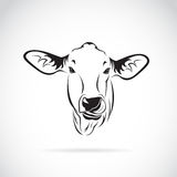 Vector of a cow head on white background. Calf Royalty Free Stock Photos