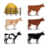 Vector Cow Icons Royalty Free Stock Images