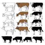 Vector cow set Royalty Free Stock Image