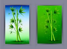 Vector creative bamboo poster. Eps10 Royalty Free Stock Photography