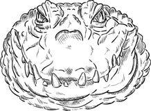 Crokodile head Royalty Free Stock Photos