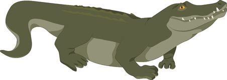 Vector crocodile Stock Photo