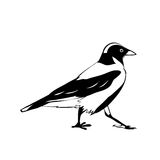 Vector crow Stock Images