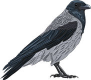 Vector crow Stock Image