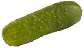Vector cucumber Stock Images