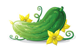 Vector - Cucumber Stock Image