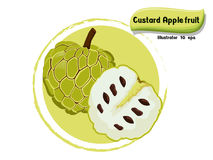 Vector Custard apple fruit isolated on color background,illustrator 10 eps Royalty Free Stock Photography