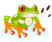 Vector Cute Cartoon Friendly Frog, Colorful. Red-eyed Tree Frog illustration royalty free illustration
