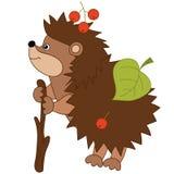 Vector Cute Cartoon Hedgehog with Leaves and Berries. Vector cute cartoon hedgehog carrying leaves and berries on spines. Vector hedgehog. Hedgehog vector Stock Photos