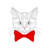 Vector cute cat portrait. Hand drawn hipster kitty head  Stock Photography