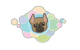 Vector  cute french bulldog head. Vector illustration Dog `s head in cartoon style Royalty Free Stock Photography