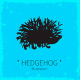 Vector cute hedgehog illustration. Stock Photography