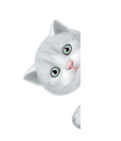 Vector of cute kitten hiding by blank. Stock Photo