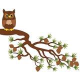 Vector Cute Owl Sitting on Pine Tree Branch. Vector cute cartoon owl sitting on pine tree branch. Vector owl. Owl on branch vector illustration