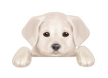 Vector of cute puppy hiding by blank. Royalty Free Stock Images