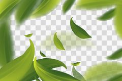 Vector 3d illustration with green tea leaves in motion on a transparent background. Element for design, advertising, packaging of. stock illustration