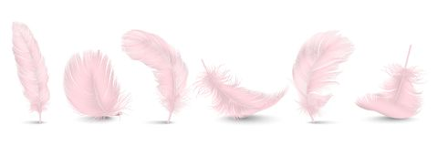 Vector 3d Realistic Different Falling Pink Fluffy Twirled Feather Set Closeup Isolated on White Background. Design royalty free illustration