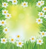 Vector daffodil flowers frame. stock illustration