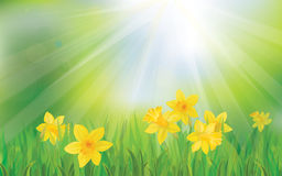 Vector of daffodil flowers on sky background. Stock Image