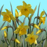 Vector of daffodil flowers . royalty free illustration