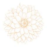 Vector dahlia flower. Vector dahlia flower isolated on white background Royalty Free Stock Photo