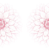 Vector dahlia flower. Stock Images