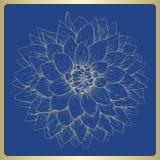 Vector dahlia flower. Vector illustration greeting card with dahlia flower Royalty Free Stock Photo