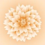 Vector dahlia flower. Vector dahlia flower  on baige background Stock Photos