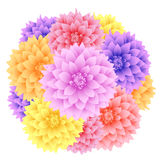 Vector dahlia flowers. Stock Photos