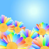 Vector daisies design. Stock Photos