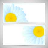 Vector daisies design. Stock Images