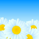 Vector daisies design. Vector illustration with daisies for greeting or invitation card Royalty Free Stock Images