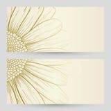 Vector daisies design. Stock Photo