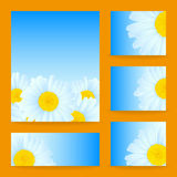Vector daisies design. Vector set greeting or invitation card with daisies Royalty Free Stock Images