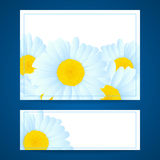 Vector daisies design. Stock Image