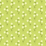 Vector daisies field seamless pattern. Cute white daisies whith leaves and stems on a green background Stock Images