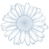 Vector daisy. Royalty Free Stock Image