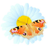 Vector daisy and butterfly. Vector blue daisy flower with gold butterfly Royalty Free Stock Image