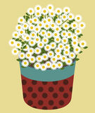 Vector of Daisy Flower. On Cream color background Royalty Free Stock Image