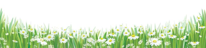 Vector daisy  flowers  field. Vector daisy  flowers  field, nature border isolated Royalty Free Stock Photos
