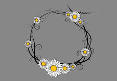 Vector daisy frame Royalty Free Stock Images