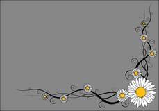 Vector daisy frame Stock Image