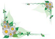 Vector daisy frame Royalty Free Stock Image