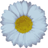 Vector daisy Stock Images