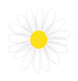 Vector daisy isolated on white background Royalty Free Stock Photos