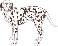 Vector. Dalmatian. Royalty Free Stock Photos