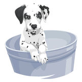 Vector of dalmation dog in bathtub. Stock Photography